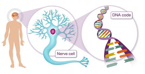 genes and dementia