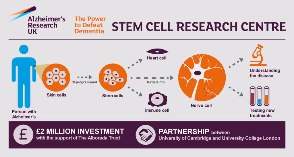 Stem Cells Reveal New Insights Into The Biology Of