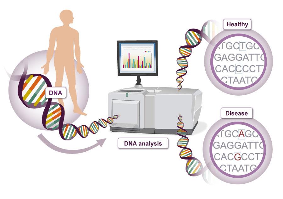 Genetics illustration