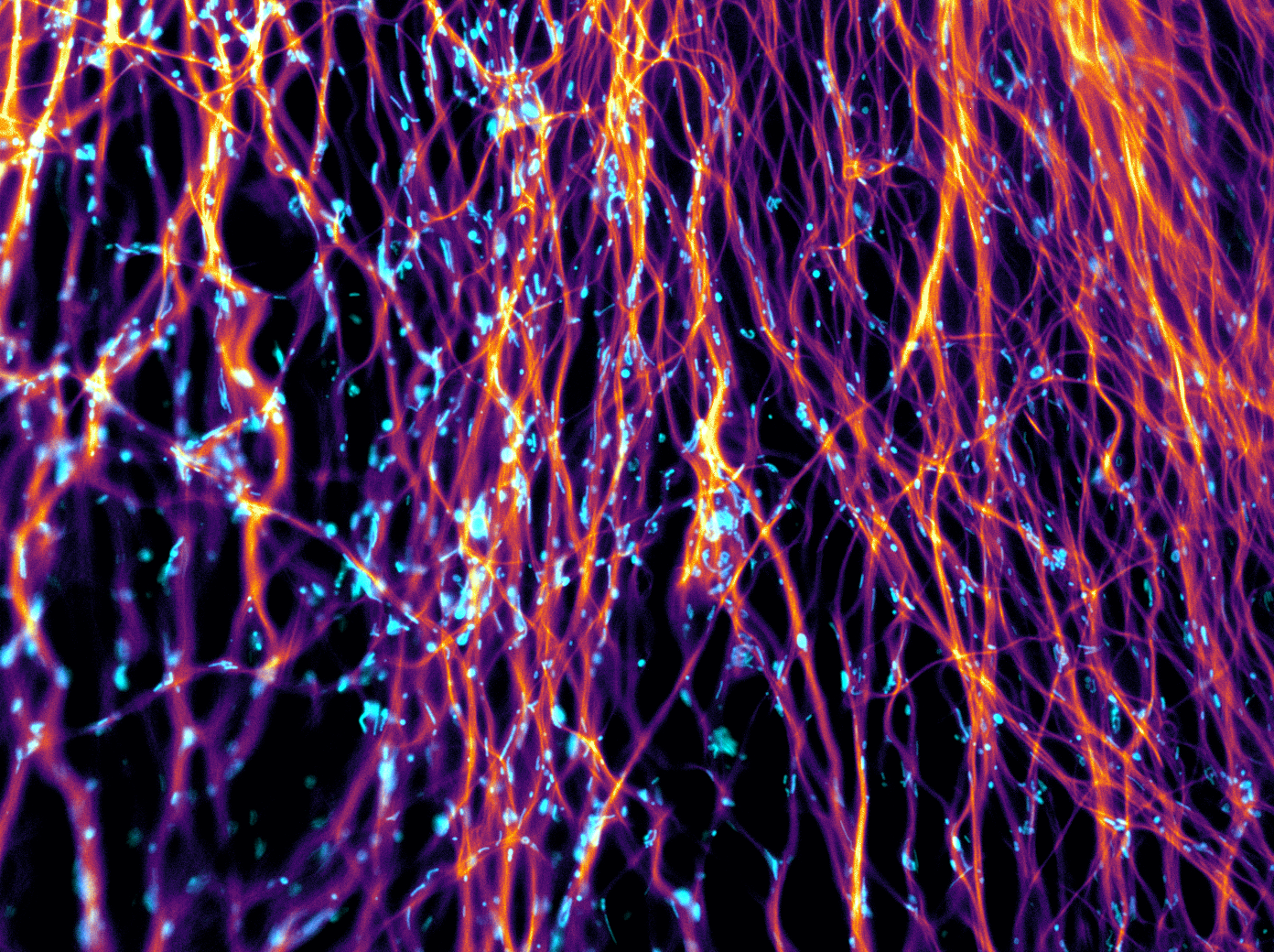 Flowing neurons, Lucia Wunderlich, University of Cambridge