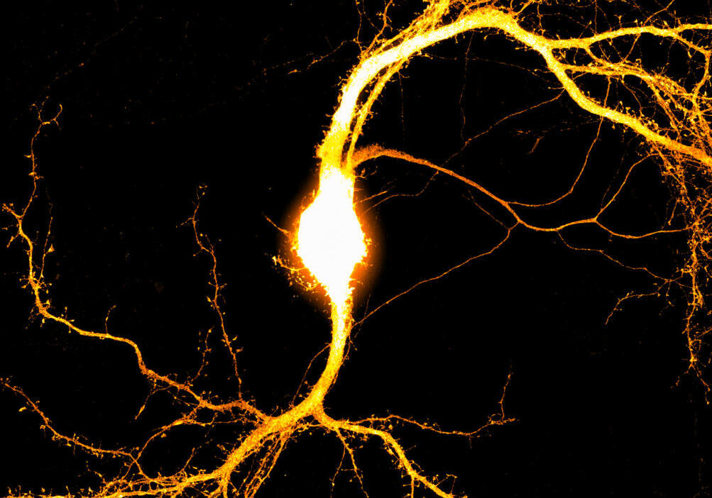05 - Neuron with synapses - Lizzie Glennon