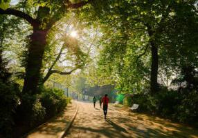 park run through tree shaded path