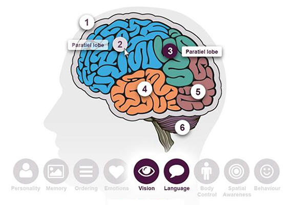 A diagram of the Brain Tour, showing the separate lobes of the brain